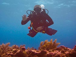 SCUBA diver on a reef